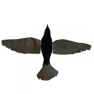 PRO FLAP CROW with BLACK WINGS