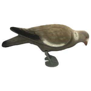 East Anglian Flocked Feeding Pigeon